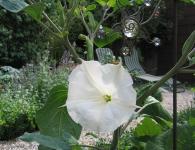 Staudengärtnerei Pfungstadt Blumen