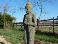 Staudengärtnerei Pfungstadt Buddha